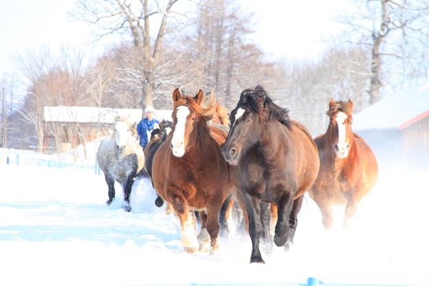 牝馬の散歩