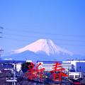 写真: 初富士