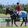 函館競馬場 誘導馬・モンテクリスエス_17(16/06/18)