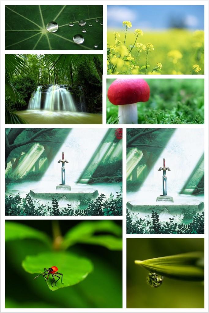 夏季绿色壁纸