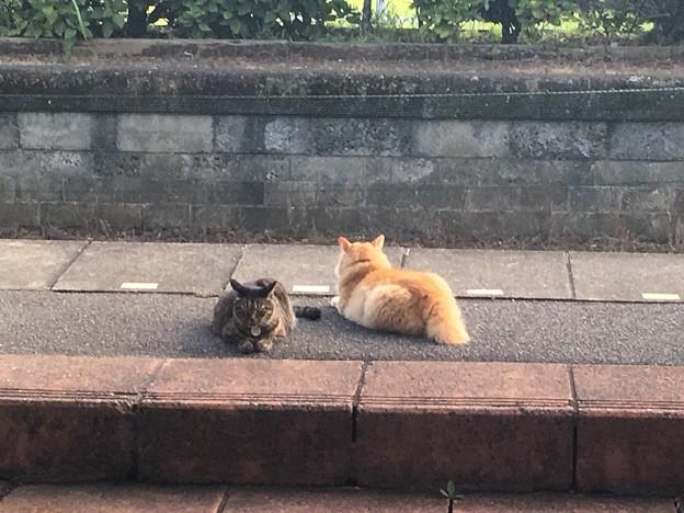 小湊鐵道 養老渓谷駅 猫