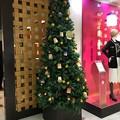 Photos: クリスマスツリー 千葉三越