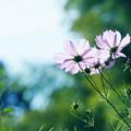 写真: 季節は外れの花