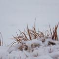 Photos: 雪の散歩道
