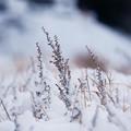 Photos: 雪に埋もれて