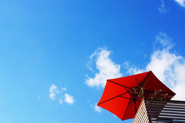 晴天を仰ぎ見て