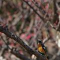 写真: 花より鳥