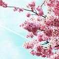春はここから