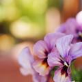 写真: 春が来たよ