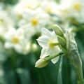写真: 俯く花