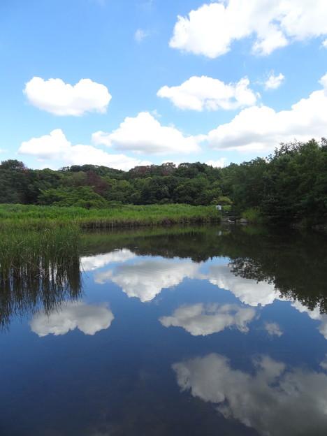 なかよし池