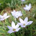 6枚の花びら