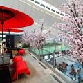 写真: 桜満開の空港