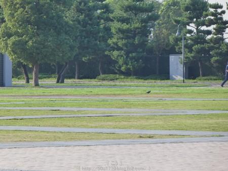 160707-赤レンガ倉庫・パーク (42)