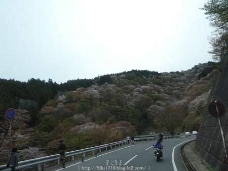 160410-吉野山 (4)