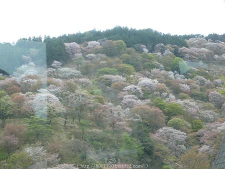 160410-吉野山 (6)