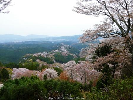 160410-吉野山 (21)