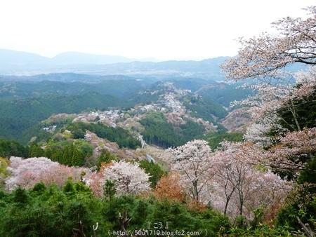 160410-吉野山 (22)