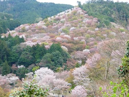 160410-吉野山 (52)