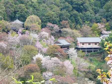 160410-吉野山 (55)
