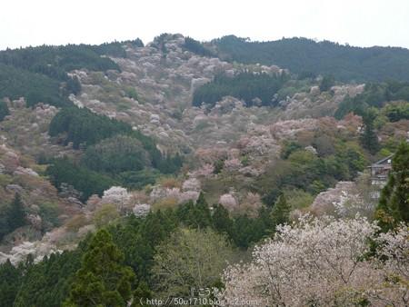 160410-吉野山 (73)