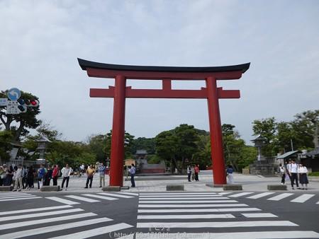 160606-鶴岡八幡宮 (1)