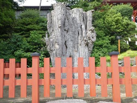 160606-鶴岡八幡宮 (13)