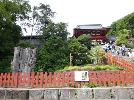 160606-鶴岡八幡宮 (16)