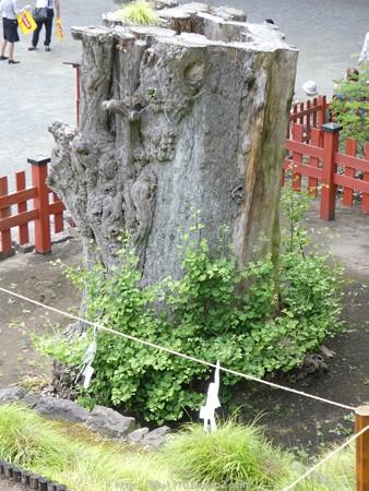 160606-鶴岡八幡宮 (20)