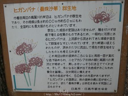 160926-巾着田 (161)