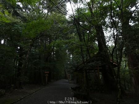 161017-瀧原宮 (13)