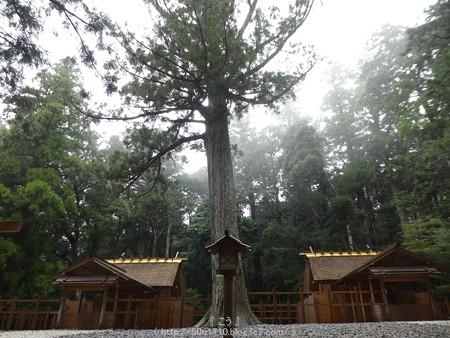 161017-瀧原宮 (26)