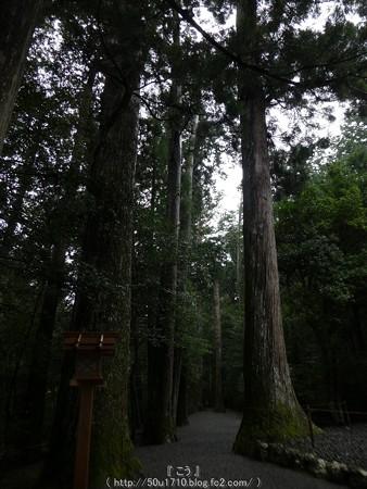 161017-瀧原宮 (43)