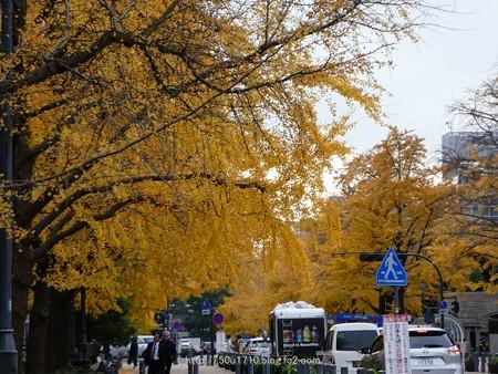 161130-山下公園通り黄葉 (7)