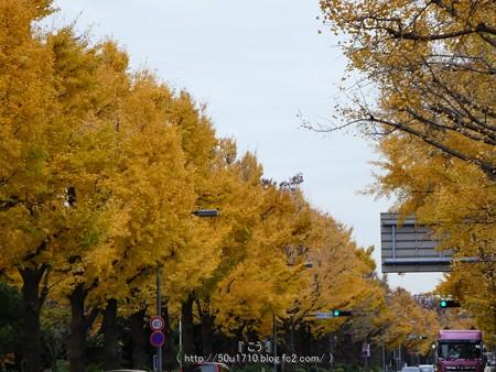 161130-山下公園通り黄葉 (21)