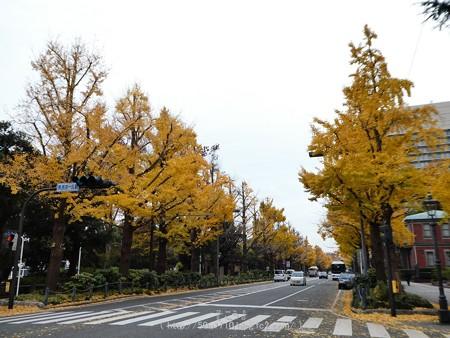 161130-山下公園通り黄葉 (22)