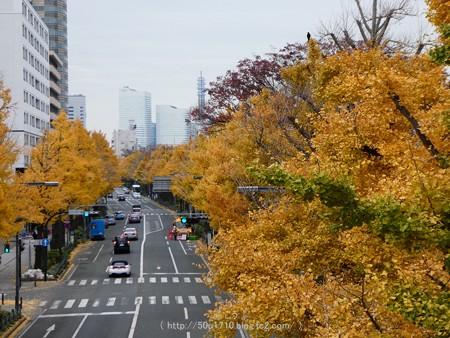 161130-山下公園通り黄葉 (46)