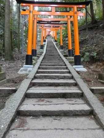 161229-伏見稲荷 (162)