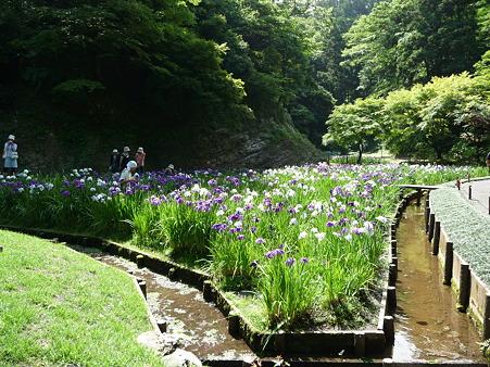 100615-明月院裏庭園-10