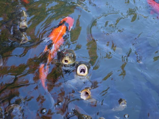 百済寺 (2)食欲の秋