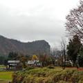 写真: 八木ヶ鼻の落葉