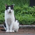 Photos: 細身な猫