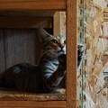 爪とぎ子猫@てしま旅館