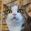 写真: 凝視し過ぎな猫2