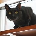写真: 凝視し過ぎな黒猫