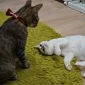 Photos: 見つめ合う猫@ネコリパブリック心斎橋