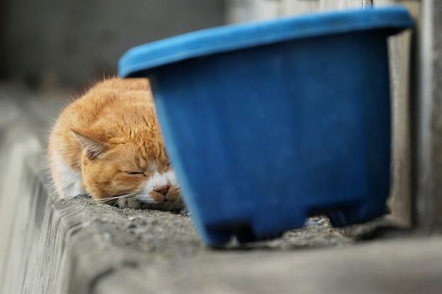 写真: ぐっすり猫