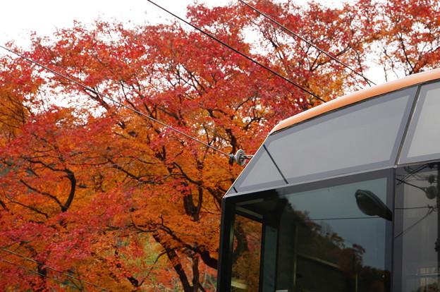 二ノ瀬駅の紅葉_8