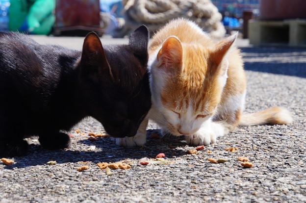 沖島のネコたち_1