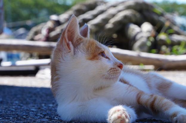 沖島のネコたち_3